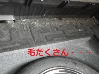 車内ペット画像.JPG